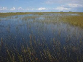 Everglades np1