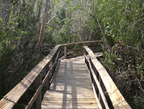 Everglades np2