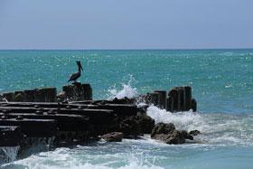 Coquina Beach4a